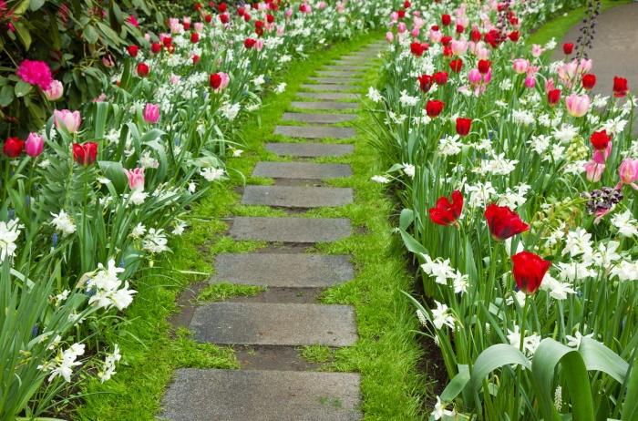 Бордюрные цветы многолетние   фото и название