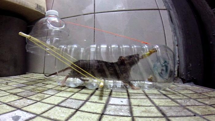 Крысоловка своими руками из бутылки фото 53