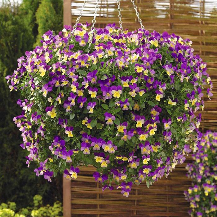 Лучшие ампельные растения для сада