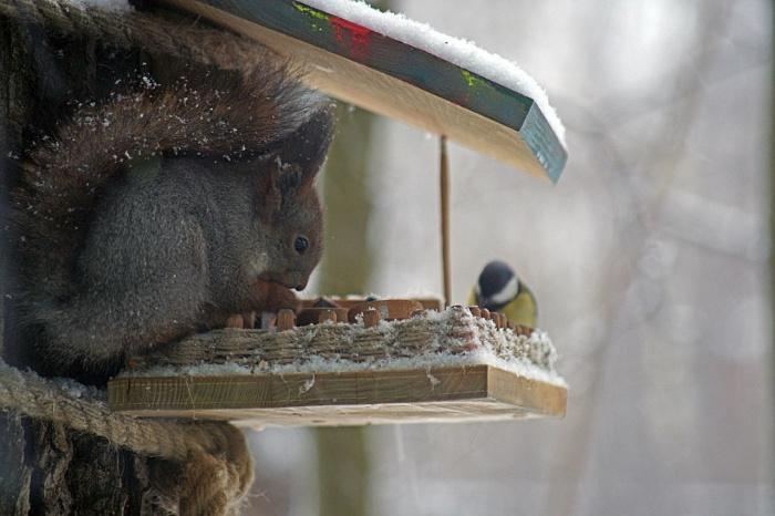 Чем кормить белок зимой в кормушке