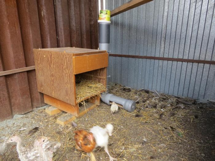 автоматическая подача корма для кур