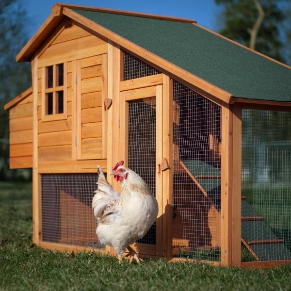 Как построить летний курятник на даче своими руками