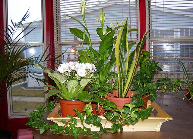 Как сделать капельный автополив для комнатных растений своими руками