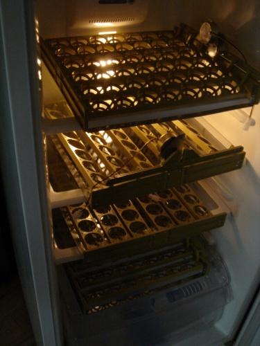 Устройство и принцип работы инкубатора для яиц