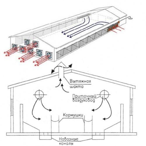 Строительство свинарника бизнес план бизнес информатика учебный план бакалавр