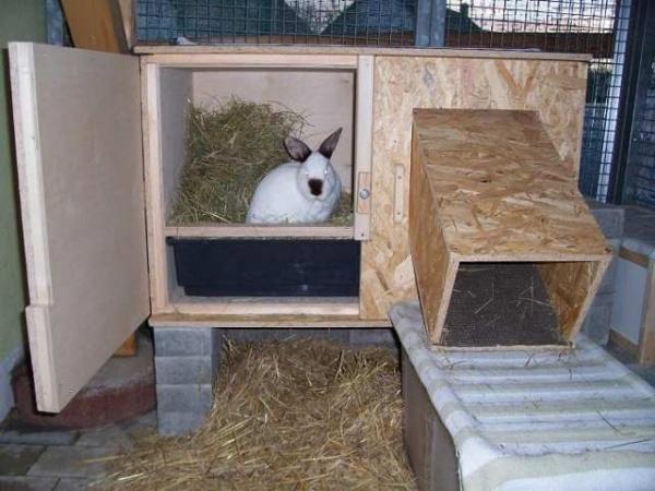 сарай для кроликов