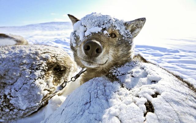 Как и чем утеплить собачью будку на зиму внутри + фото