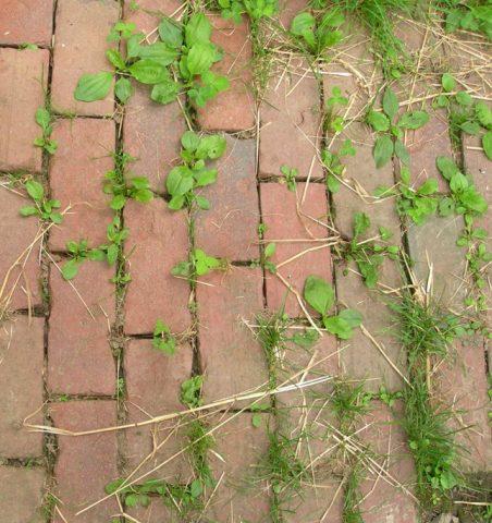Как быстро избавиться от травы между тротуарными плитками