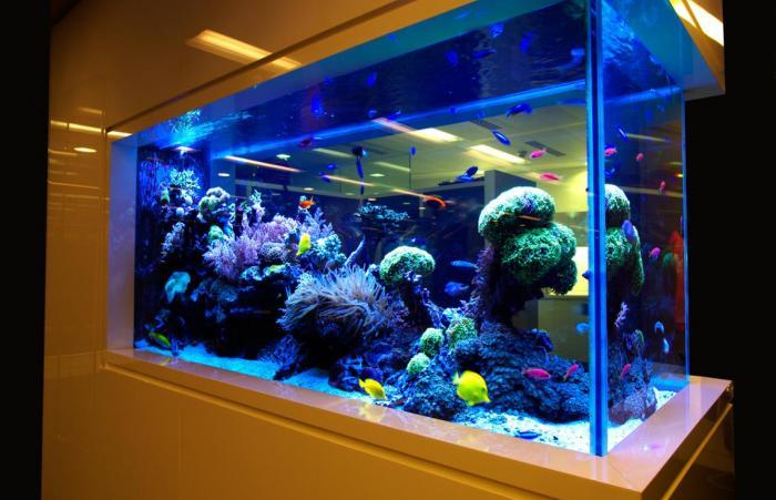 Кормушка для аквариума своими руками фото 45