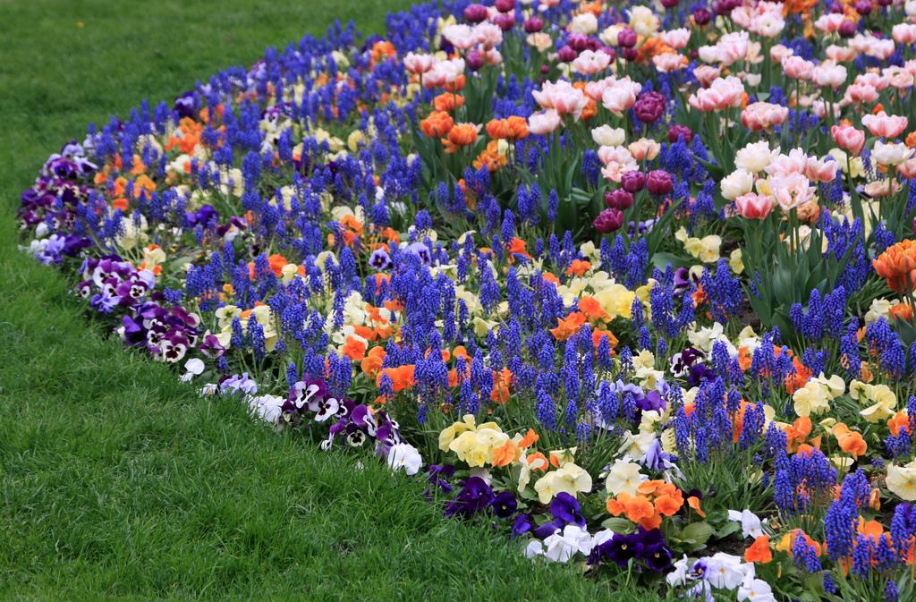 Весенние цветы на клумбах