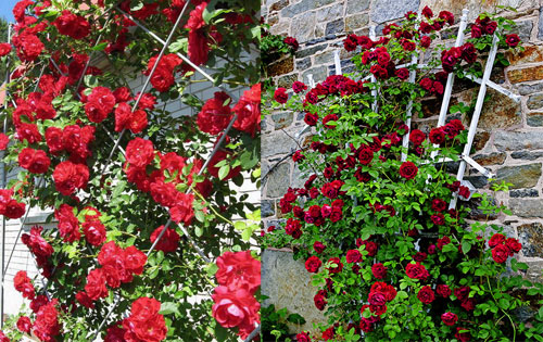 Опори для роз своими руками фото