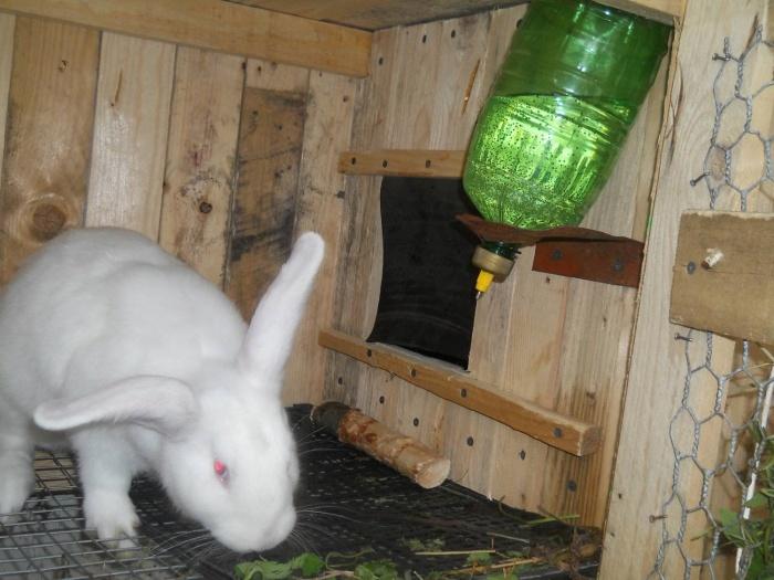 Клетки-поилки кроликов