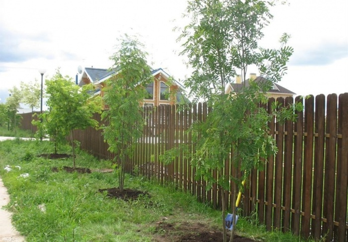 Какие кустарники и деревья можно сажать летом 16