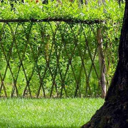 живая изгородь из ивы фото