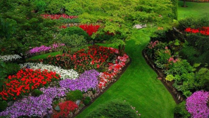Какие многолетние цветы сажать на даче 609
