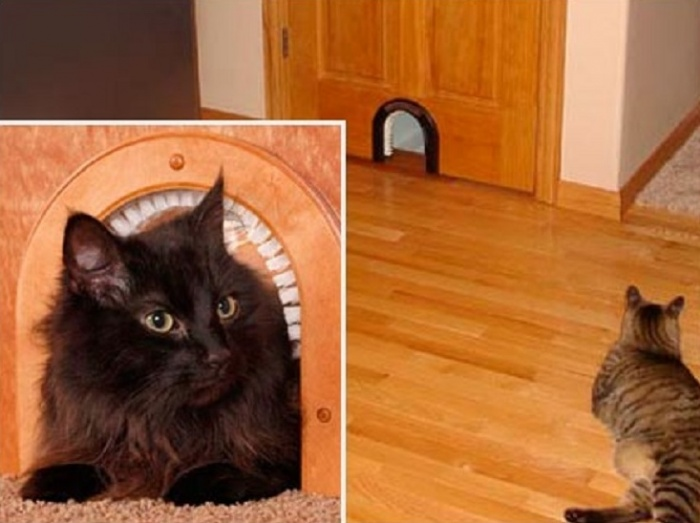 Дверь для кошки сделать своими руками 9
