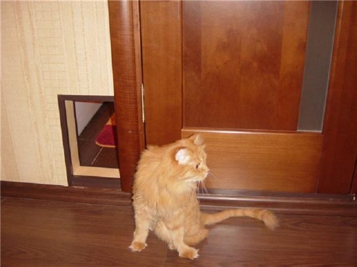 Дверь для котов своими руками 42