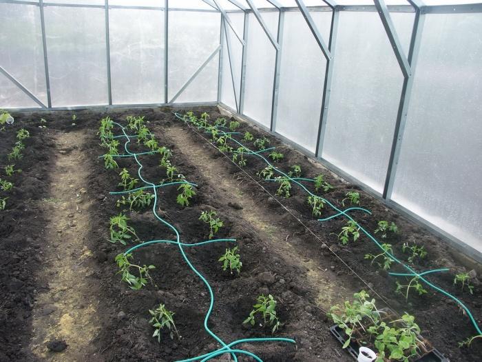 Орошение огорода своими руками фото 201