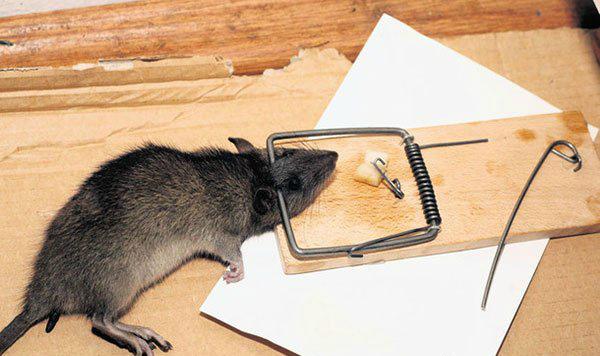 как славить в ч¤сном дом крысу