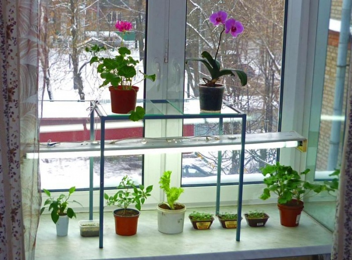 Выращивание на искусственном освещении 620
