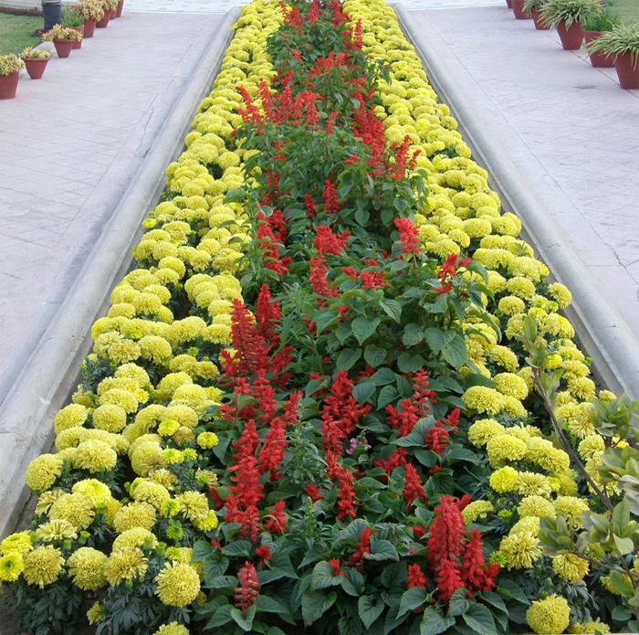 Как красиво посадить цветы на прямоугольной клумбе