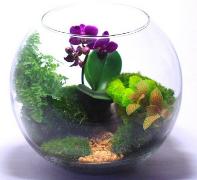 Стеклянные флорариумы
