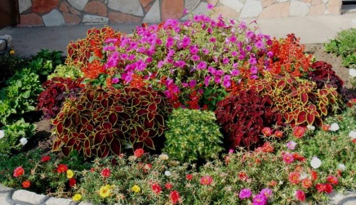 Какие цветы сажают в тень 94