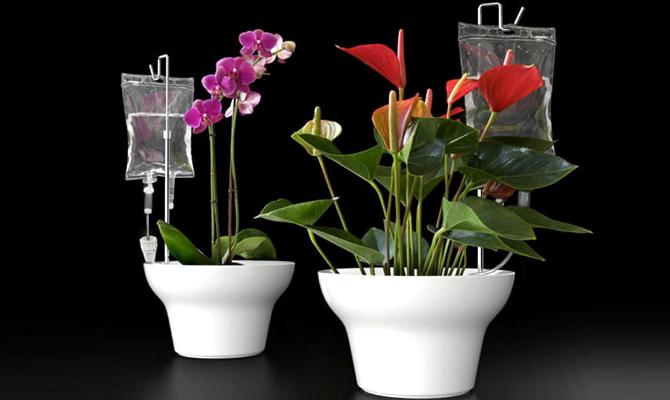 Освещение комнатных растений своими руками