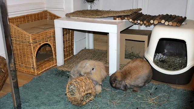 Как сделать домик декоративных кроликов