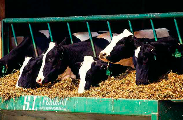 Как кормушку для коровы сделать