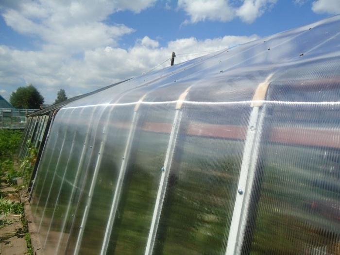 Выращивание помидоров - посадка и уход от А до Я Сайт о