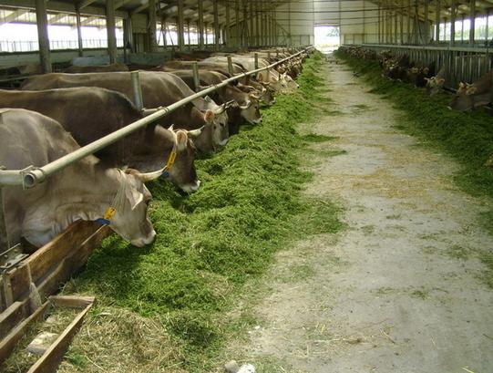 Как сделать кормушку для коров своими руками