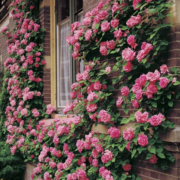 Цветы на даче фото