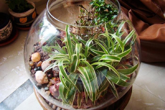 Террариум для растений