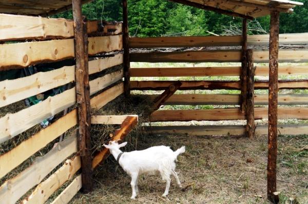 Как сделать кормушку для коз