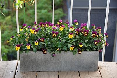 Ящики для цветов на балконе.
