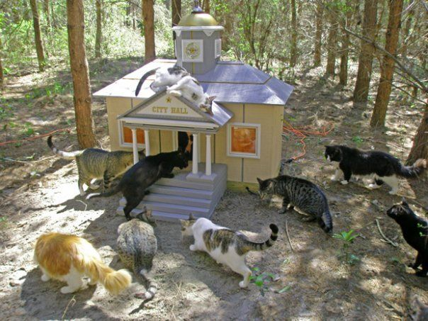 Дом для кошки на улице  фото