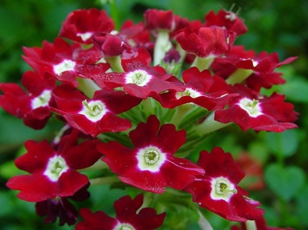 цветы на балконе