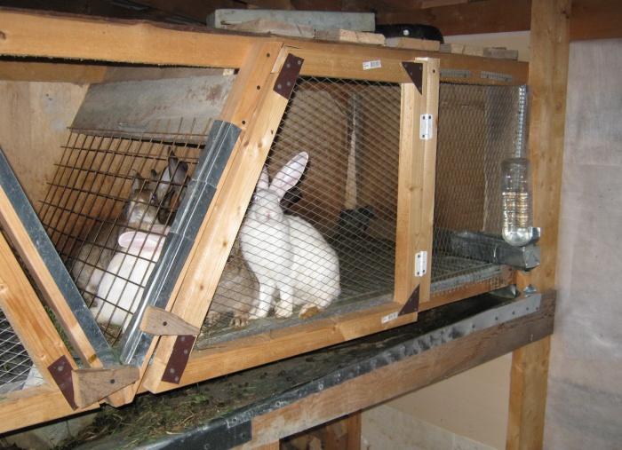 Кролики клетка своими руками