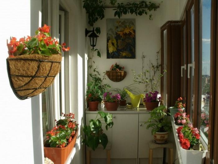 Цветы на застекленном балконе солнечная сторона