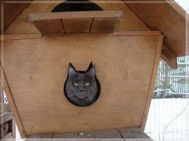Домик для кота на улице зимой