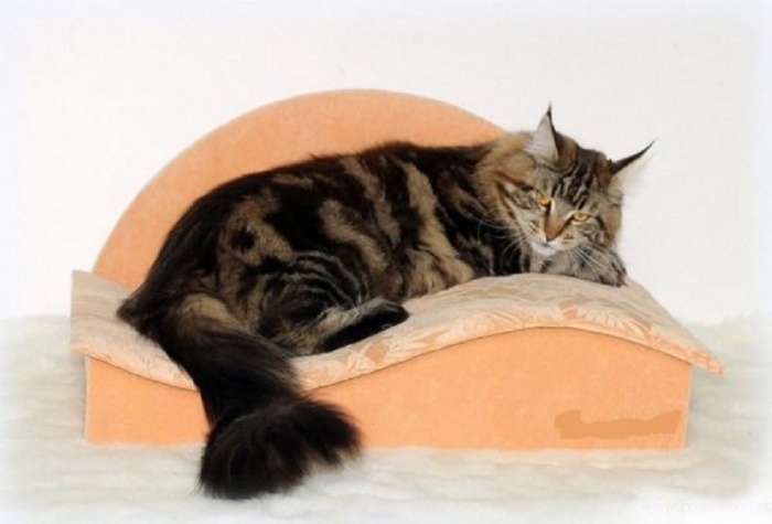 Как сделать миниатюрного кота