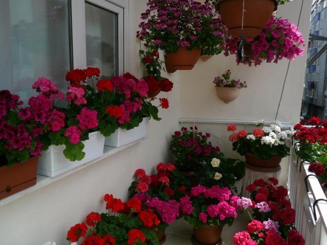 Цветы на балконе.