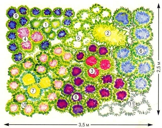 Какие многолетние цветы сажать на даче 423