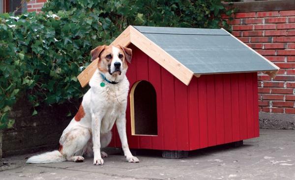 будка с собакой