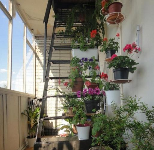 цветы на пожарной лестнице